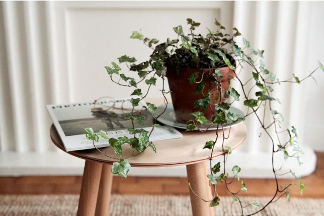 Verplaats uw kamerplanten
